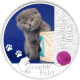 Nos Amis les Chats : Le Scottish Fold